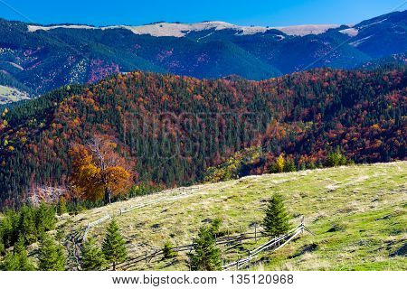 Three Layer Autumnal Mountain Perspective with Grassy Meadow Colorful Forest and High Hills and Blue Sky