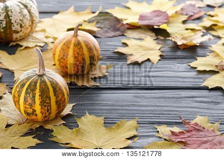 Autumn dark wooden background with ornamental pumpkins and yellow leaves