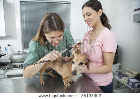 Happy Vet Examining Dachshund's Ear With Otoscope By Woman