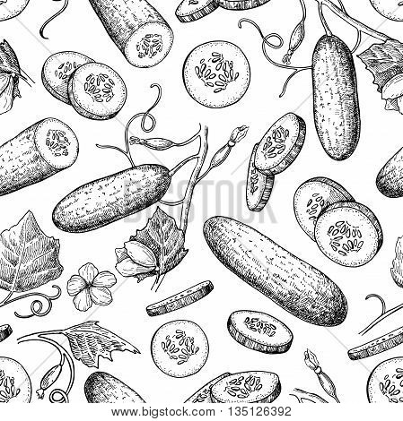 Cucumber hand drawn vector seamless pattern. Vegetable engraved style illustration. Isolated cucumber plant and sliced pieces. Detailed vegetarian food drawing background. Farm market product.