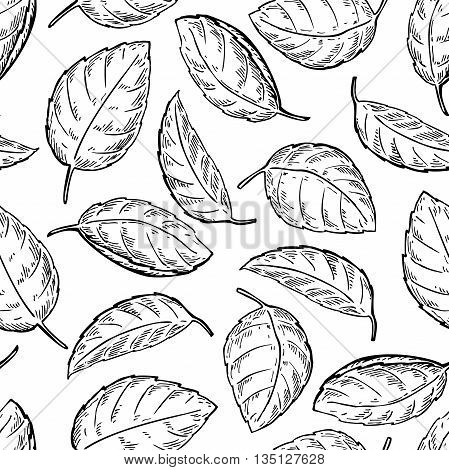 Mint vector drawing seamless pattern. Isolated mint plant and leaves. Herbal engraved style background. Detailed organic product sketch. Cooking spicy ingredient