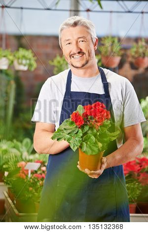 Smiling gardener with begonia in a nursery shop