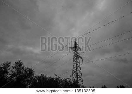 Black and white high-voltage pylon with birds on wires