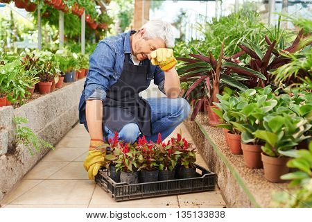 Exhausted gardener working in a greenhouse with flowers