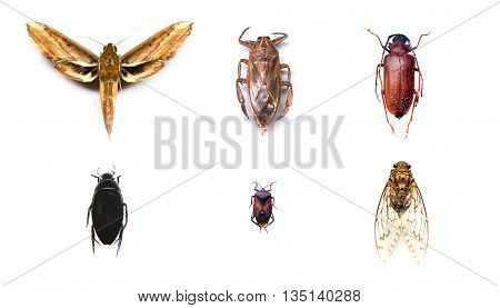 Collection of insects on isolated white background.