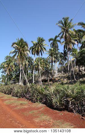 Cuban Nature