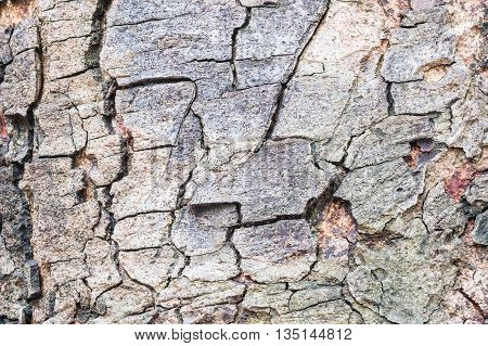 Closeup surface wood pattern at the cracked skin of trunk of tree texture background