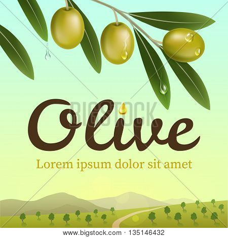 Label of green olives. Realistic olive branch on a background an olive farm. Design elements for packaging. Vector illustration