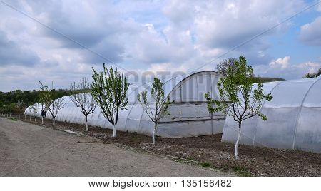 KAPUSTYNTSI - Chortkiv - Ukraine - April 20 2016. The appearance of greenhouses with polyethylene film to agribusinesses