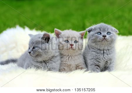 Three Kitten On White Blanket