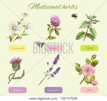 Vector vintage set of wild flowers and medicinal herbs. Design for cosmetics herbal tea homeopathy beauty salon natural and organic health care products. Can be used as boho style elements.