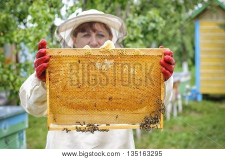 woman Beekeeper controlling beehive and comb frame