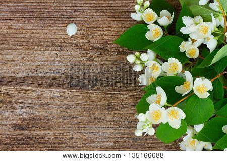 Jasmine fresh flowers and leaves border on wooden table