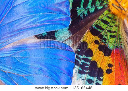 Texture of blue and multicolored butterflies macro natural background