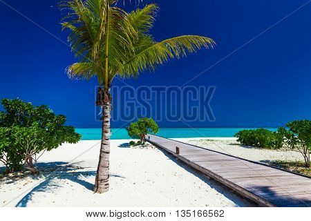Palm tree in tropical perfect beach with jetty in distance
