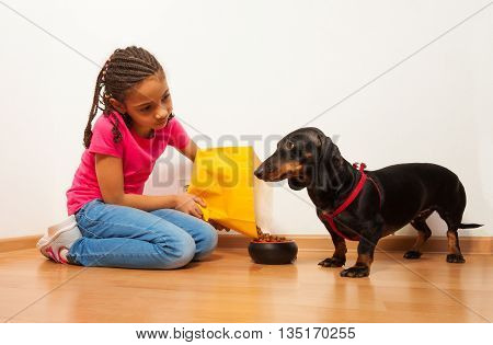 Nice black girl feed dachshund dog putting feed from package to plate on the floor at home