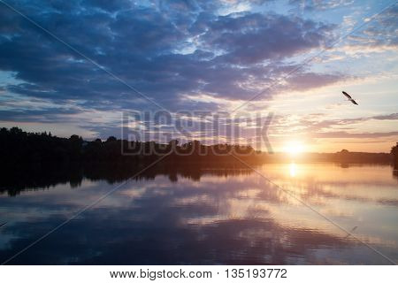 Beautiful sunset over the lake with bird in the sky