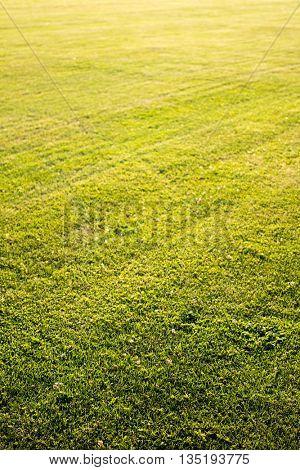 green cutted grass background
