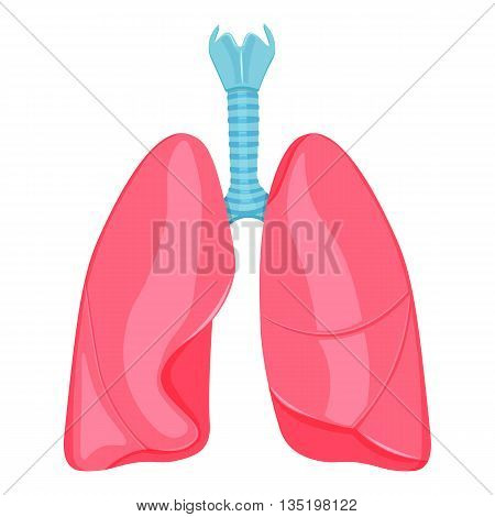 human lungs vector illustration isolated on a white background