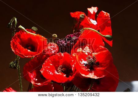 Bouquet of poppies. Red flowers sign of remembrance day