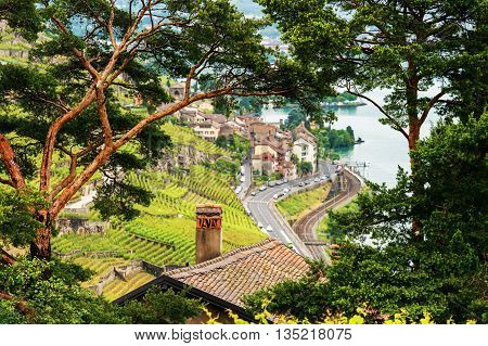 View on Lavaux vineyards through natural tree frame