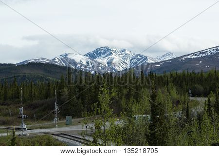 Traveling through the mountains and forests of Denali National Park