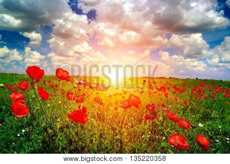 Bright sunrise in the poppy field and blue sky