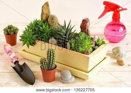 Room Flowers In Pot