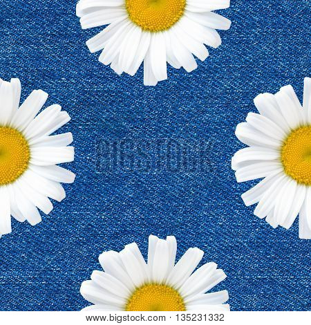 Daisy flowers seamless pattern on blue jeans background