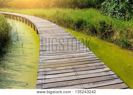 Wooden path with lake at evening