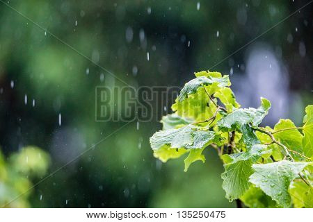 Heavy rain in park forest selective focus on grass