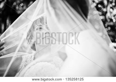 Close Up Portrait Of Lovely Wedding Couple Uder Veil