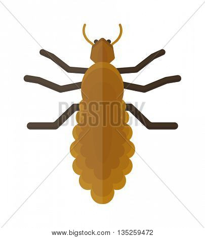 Beetle insect isolated on white background vector