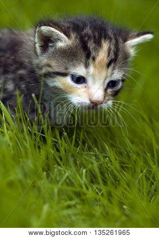 Little Cat In Garden