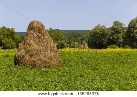 Haystacks on beautiful summer plateau in Carpathian mountain. Panoramic view on summer rural landscape with haystacks near forest. Green valley.