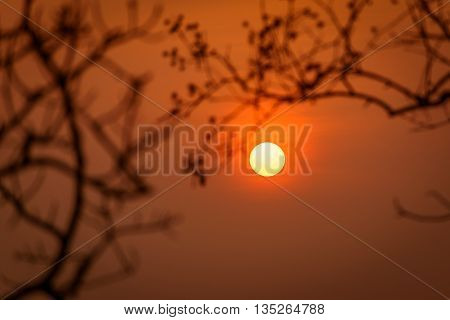 Beautiful sunset with silhouete of Blurred branches. focus on sun
