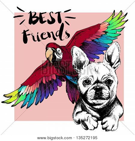 Vector hand drawn concept of french bulldog and ara macaw frienship. Color hand drawn domestic dog and wild exotic parrot illustration. Decorated with square border. Best friends.