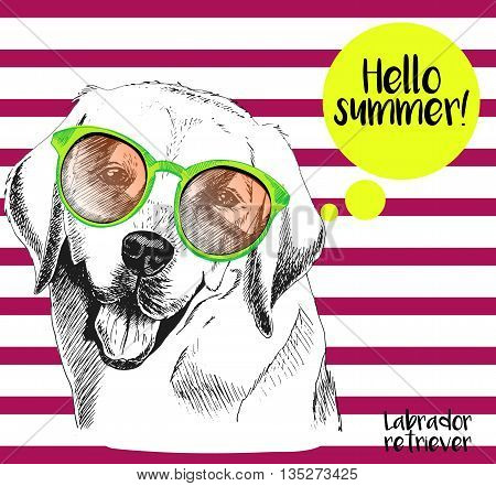 Vector close up portrait of labrador retriever wearing the sunglassess. Hello summer. Hand drawn domectic dog illustration. Isolated on background with cherry strips.