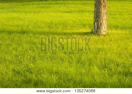 Summer lawn bright background. Tree stack at field.