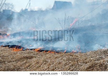 Dry grass burning in the early spring