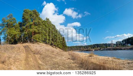 Big beautiful pine trees grow on the big hill above the river