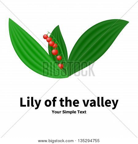 Vector illustration of a poisonous plant. Plant with poisonous berries lily of the valley. Isolated on white background.