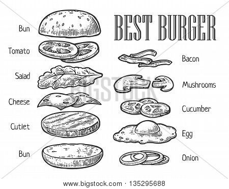 Burger ingredients. Isolated painted components on white background. Vector vintage engraving illustration for poster menu web banner info graphic