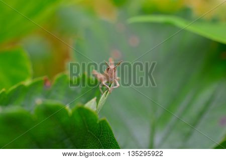 closeup of a grasshopper sitting on a green plant