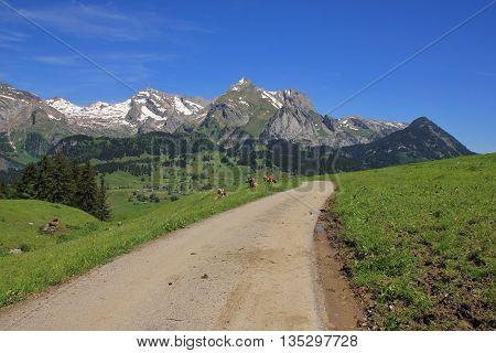 Scene in the Toggenburg valley Switzerland. Nature background.