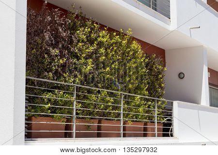 plant in pots on balcony european house
