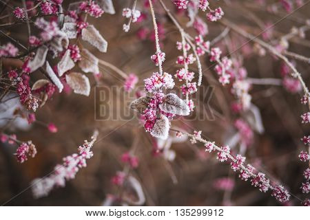 a flowering tree. impresses with color. each branch