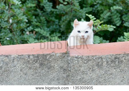 White cat on the roof looking at the camera.