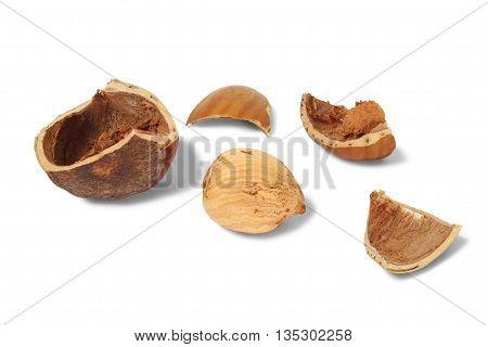 Hazelnut with broken shell on white background
