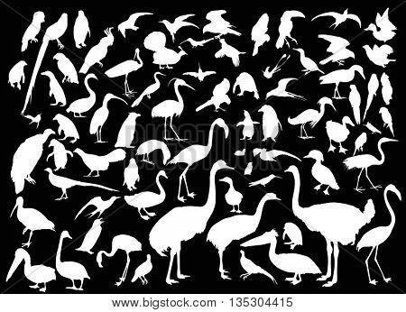 illustration with different bird silhouettes isolated on black background